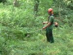 Brush cutting in a woodland clearing.